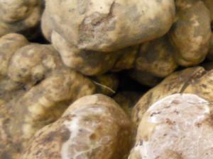Tuber-Magnatum-Pico , бял трюфел